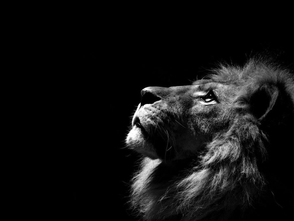 Šaljivi horoskop: Lav