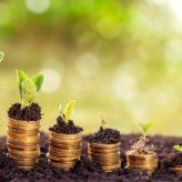 Pet poznatih biljaka koje donose novac!
